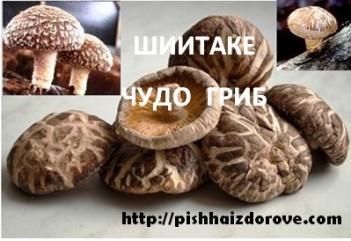 Китайские грибы шиитаке
