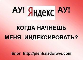 Яндекс не индексирует сайт