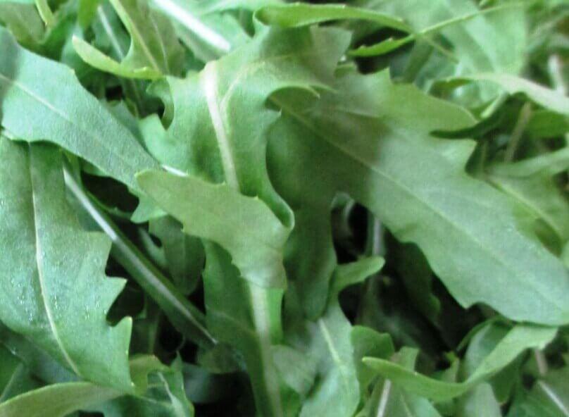 Руккола - это зелень, семена, масло и салат из рукколы