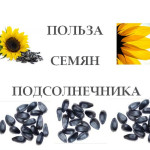 Польза-семян-подсолнечника