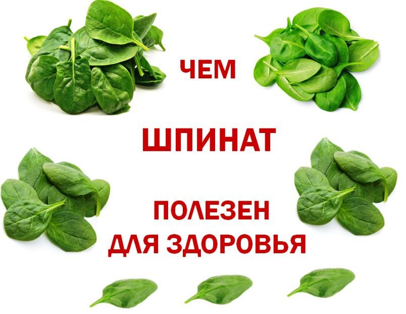 Чем шпинат полезен для здоровья