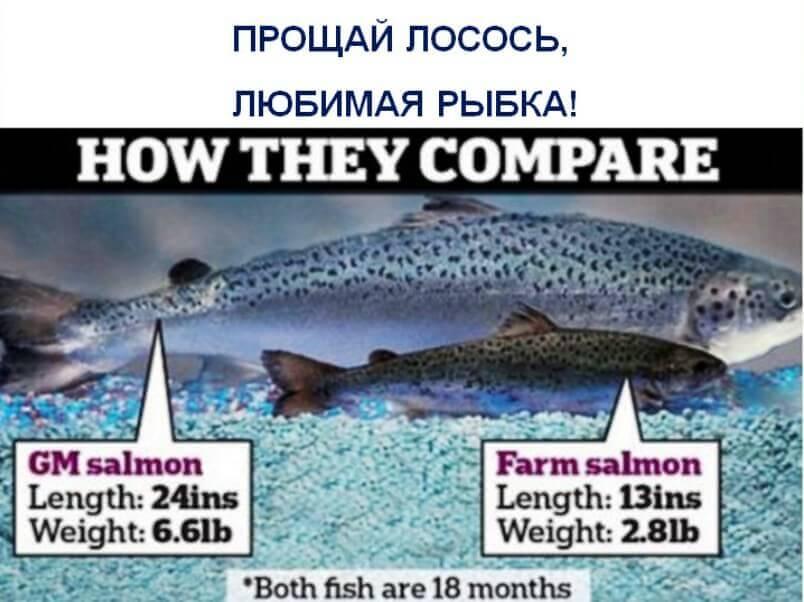 Прощай-лосось-любимая-рыбка