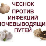 Garlic-against-UTIs