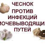 Garlic-against-UTIs