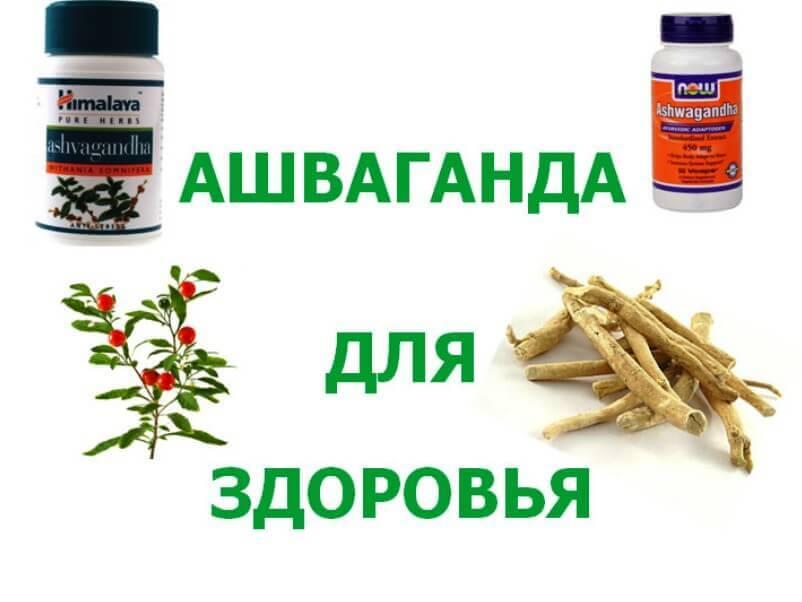 Ashvaganda-dlya-zdorovya