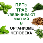 5-grass-magnesium-increase-in-the-human-body