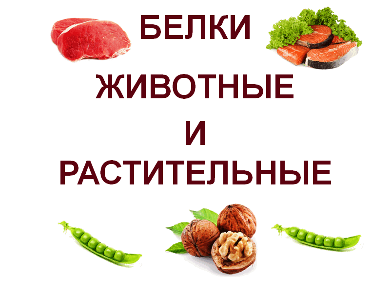 Animal-and-vegetable-proteins
