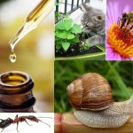 The-use-of-essential-oils-in-the-garden