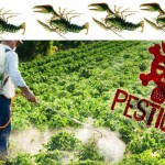 Pesticides-and-cancer