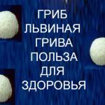 Lions-mane-mushroom-health-benefits
