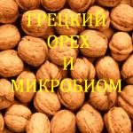 Walnut-and-microcosm