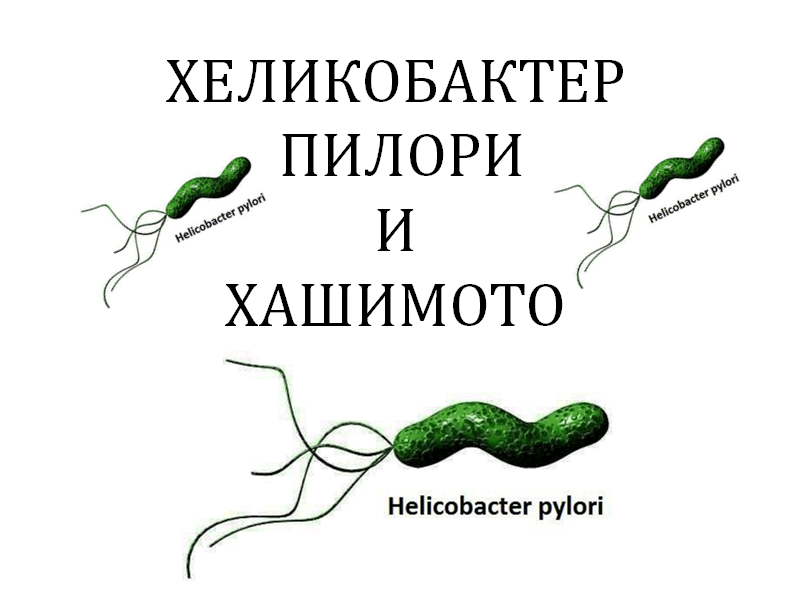 Helicobacter-pylori-and-Hashimoto