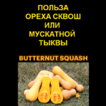Use-nut-squash-or-butternut-squash