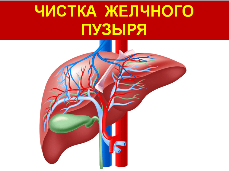 Cleansing-the-gallbladder